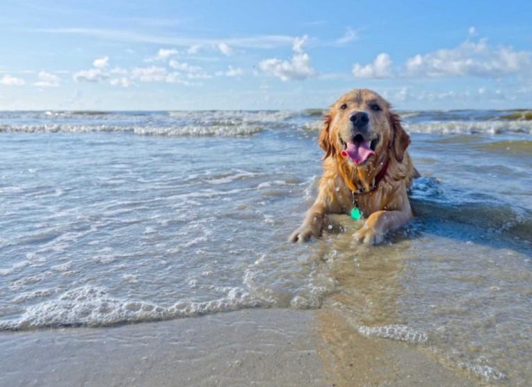 terracina spiagge vietate ai cani