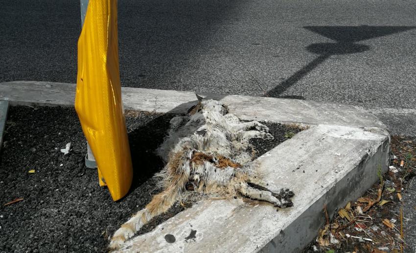 Gatto morto in strada