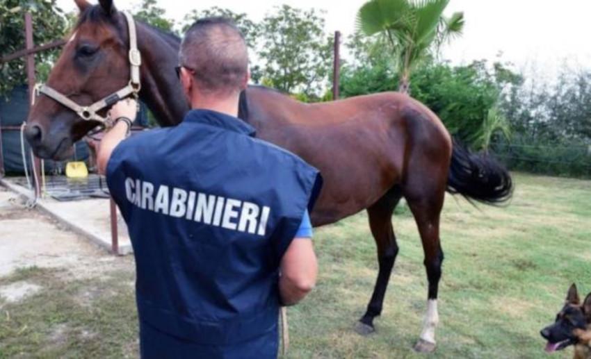 Cavalli rubati Bracciano