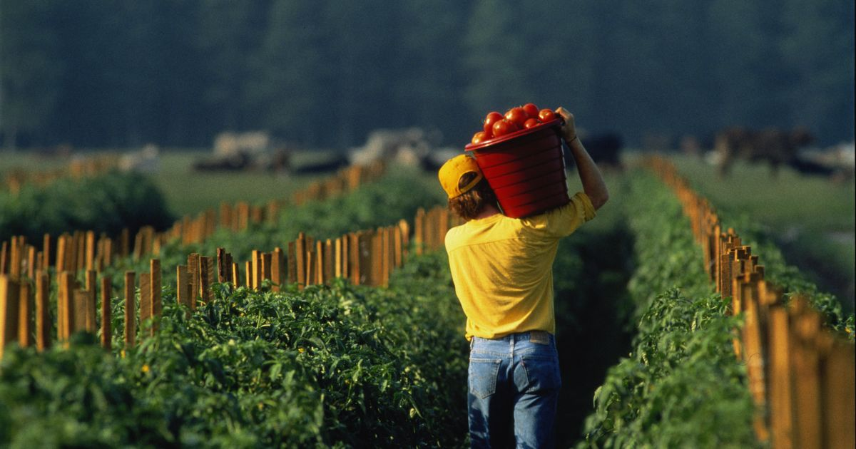 Lavoro nei campi